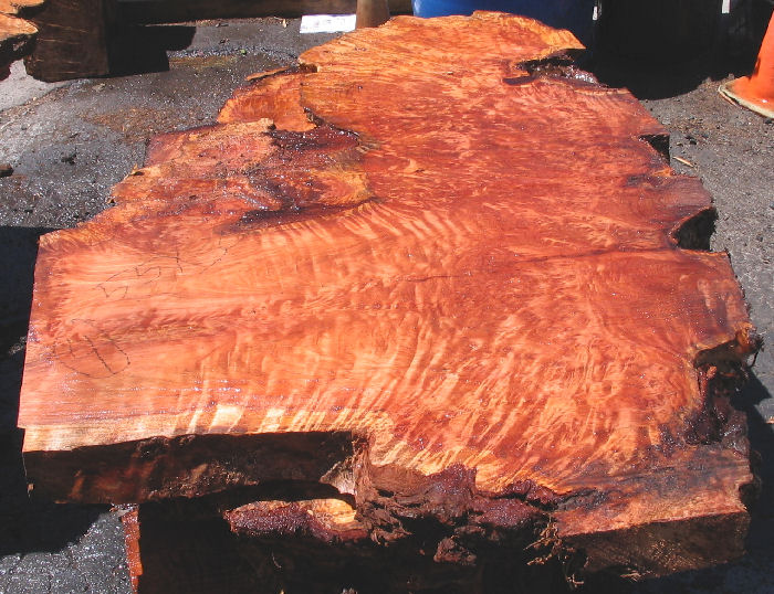 Redwood Burl Slab